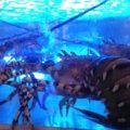 なぜか多い!?水槽式魚介類・シーフード販売&レストランは新鮮で旨い!