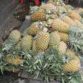 【南国フルーツ図鑑】トロピカルフルーツの代名詞パイナップル