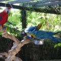 家族で楽しめるホーチミンの鳥カフェPet Meはインコ、動物が一杯!